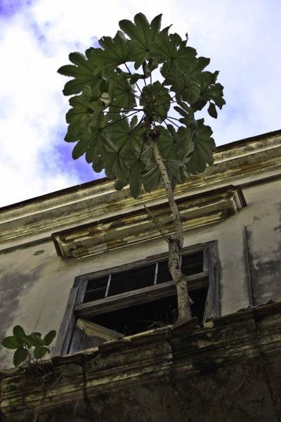 Havana-105