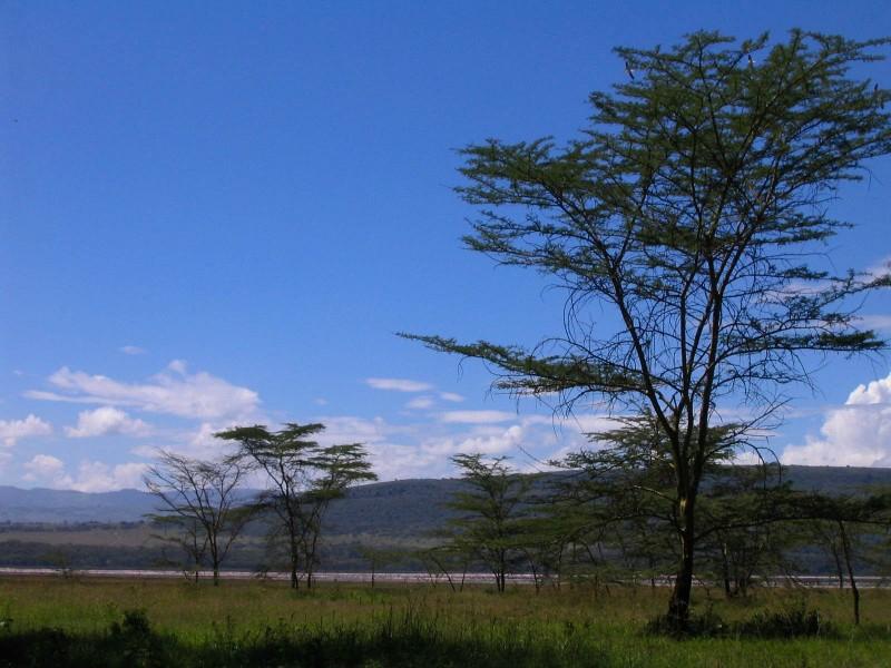 Lake_Nakuru_14-2