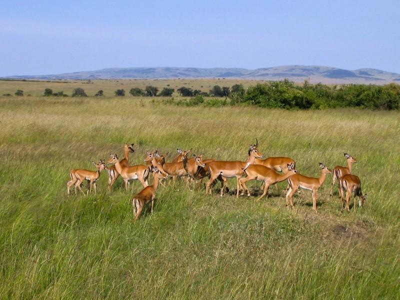 Masai_Mara_18-2