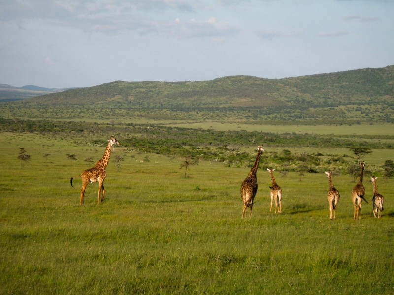 Masai_Mara_2-2