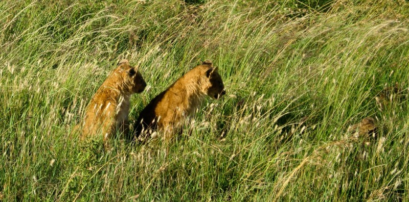 Masai_Mara_3-3